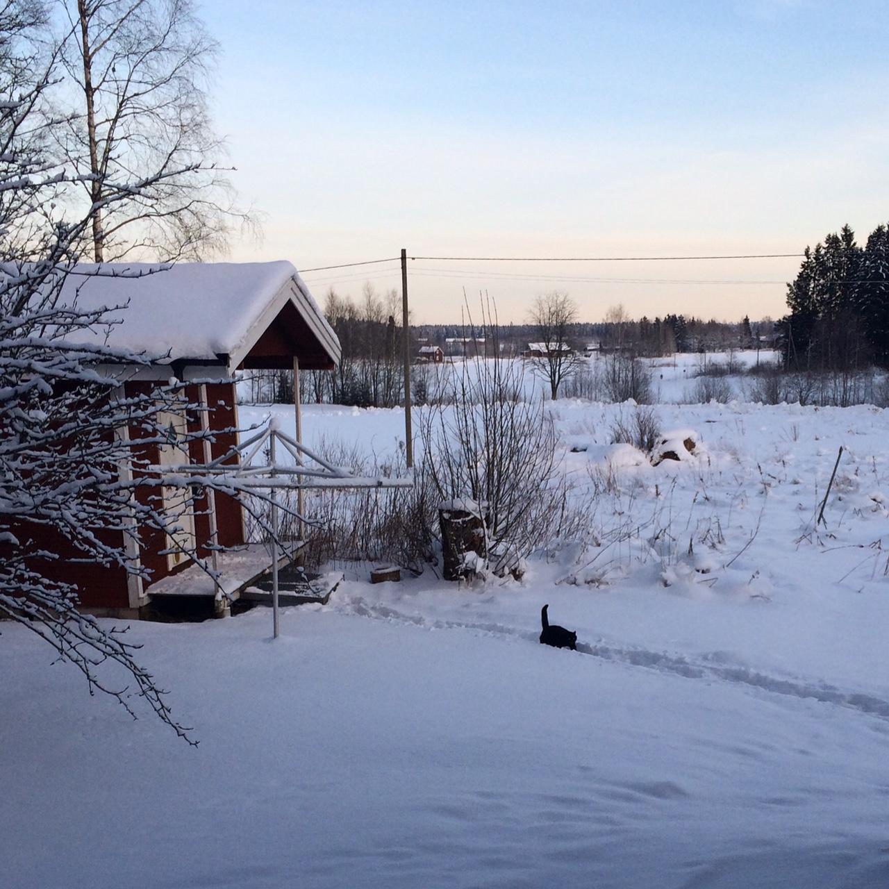 grasholmen vinter