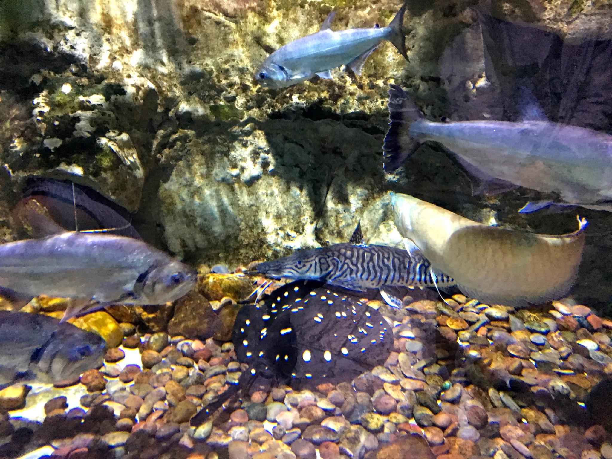 dubai akvarium barn