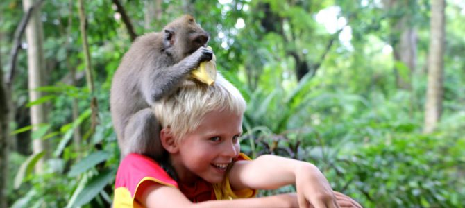 Roliga Monkey Forest, Ubud