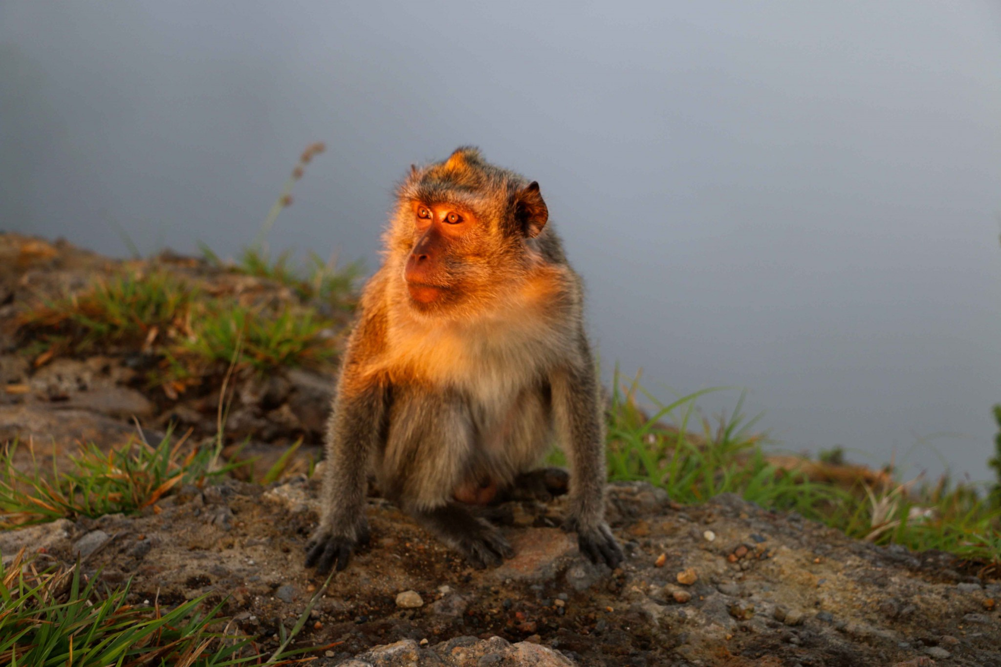 kelimutu-monkey