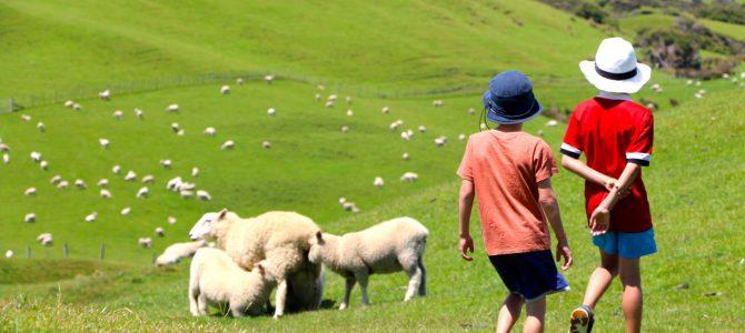Nya Zeeland – inte bara en dans på gröna kullar