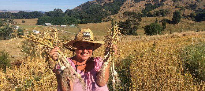 Vi jobbar på farm på Nya Zeeland – Dag 2