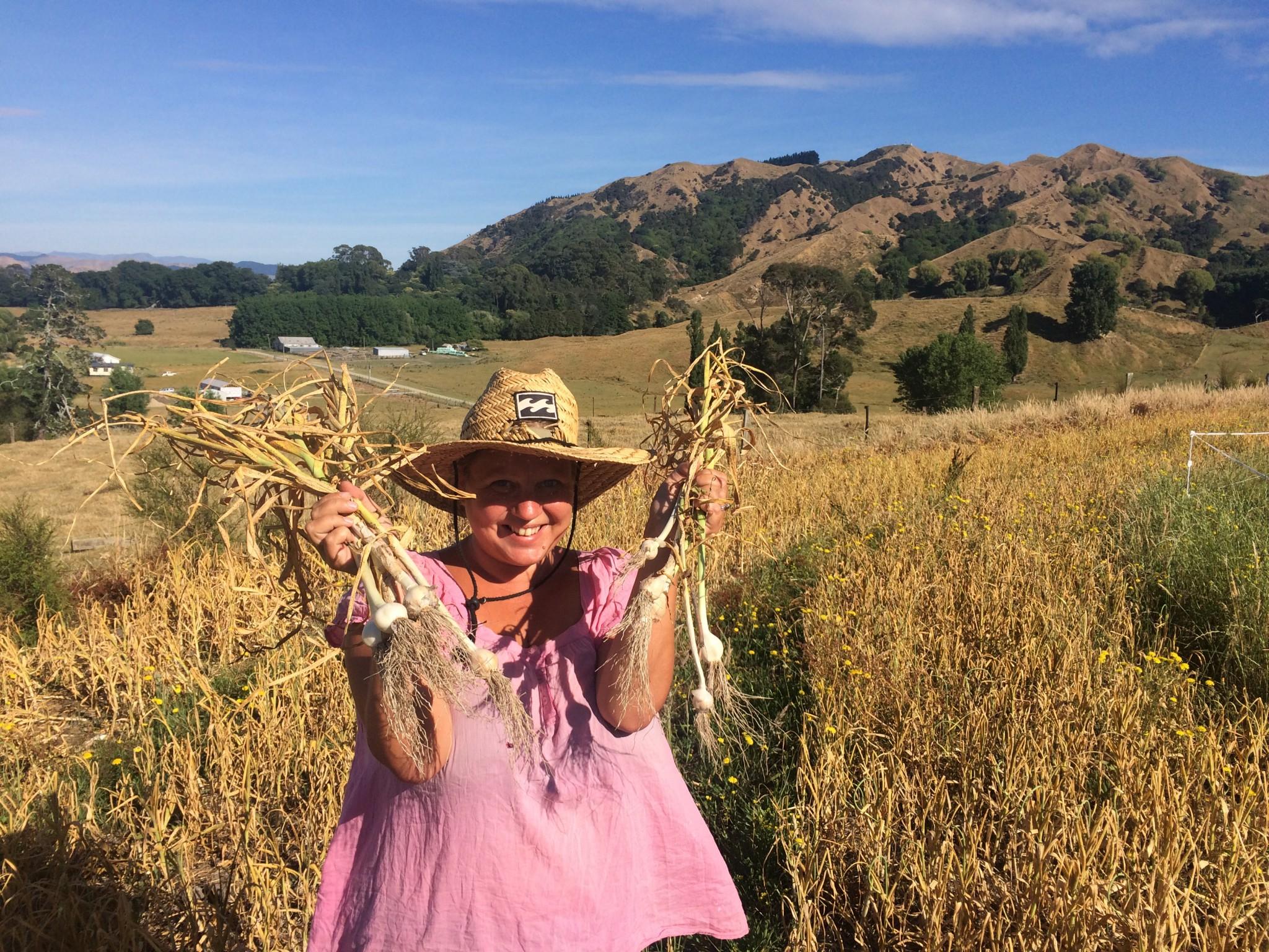 farm på Nya Zeeland