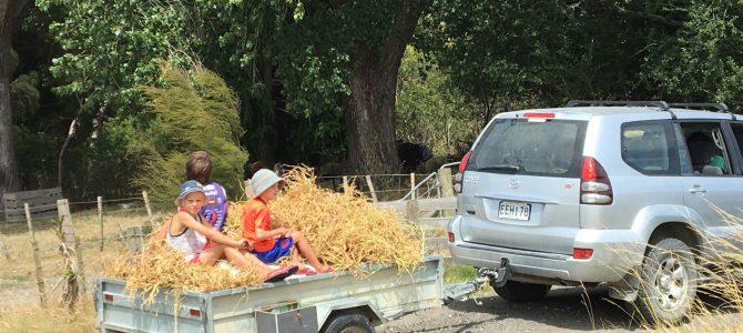 Vi jobbar på farm i Nya Zeeland – Dag 4