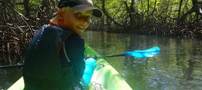 Bocas del Toro – Kajak genom mangrove forest