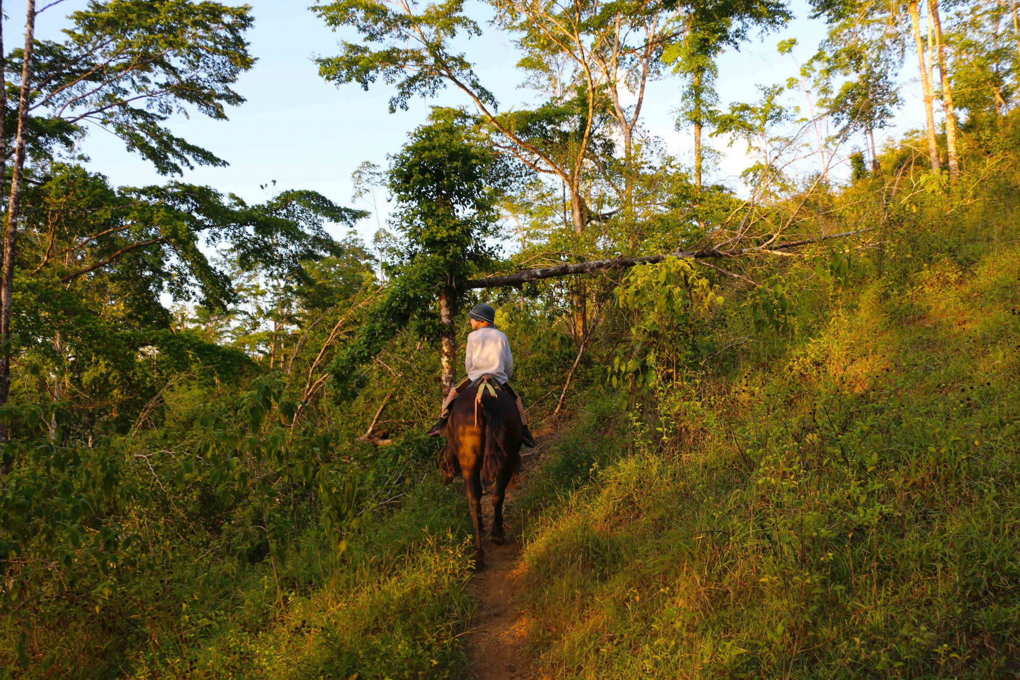 basecamp bartola horseriding