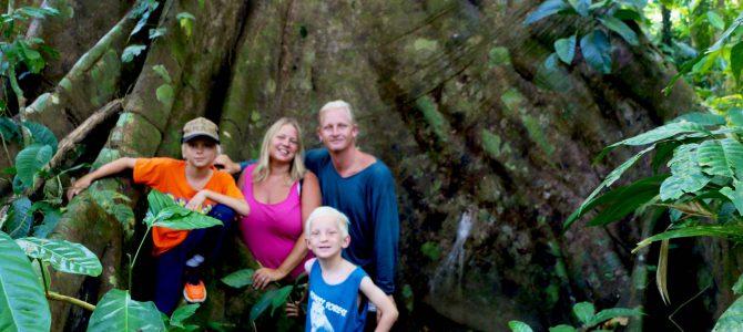 Los Guatuzos – Nicaraguas fantastiska regnskog