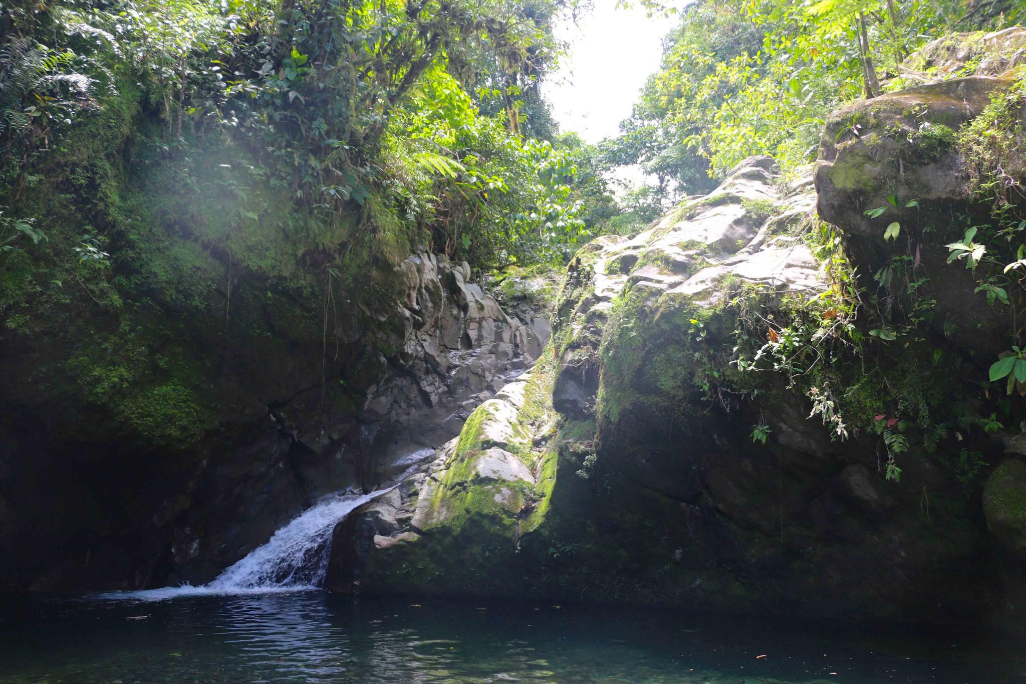 regnskogen i costa rica