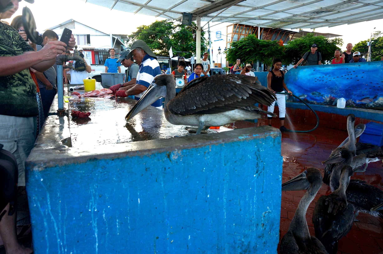 puerto ayora fiskmarknad